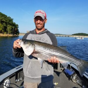 Norfork Lake Striper Fishing
